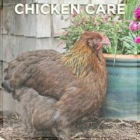chicken-care