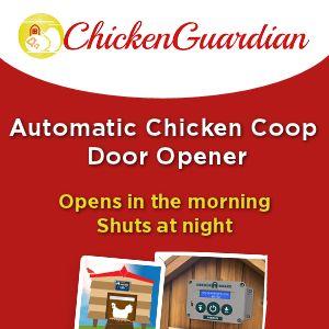 Chicken Guardian