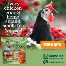 Spruce the Coop