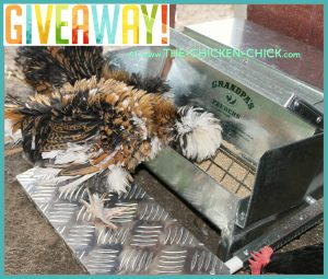 Grandpa's Feeders Giveaway at www.The-Chicken-Chick.com