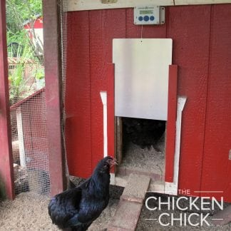 Araucana with ChickenGuard automatic chicken door opener